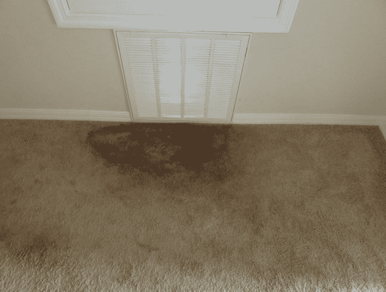 6-Steps-For-Preventing-Carpet-Mold-Following-Water-Damage